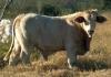 ivan-lopez27 - Farmzer granjero