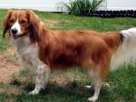 Perro - Conejo de campo (24 años)